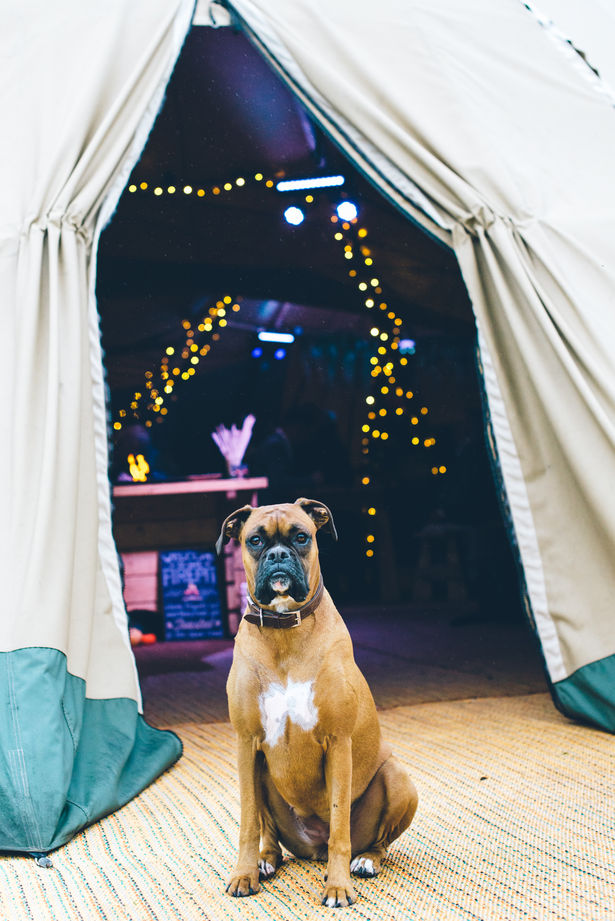 Dogs At Tipi Wedding Venues - Page Boy Dogs